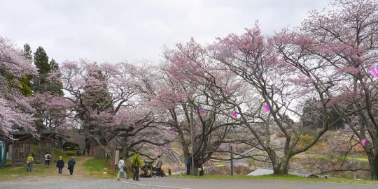 201704201010 上の神社広場 w1024 P1060926.jpg