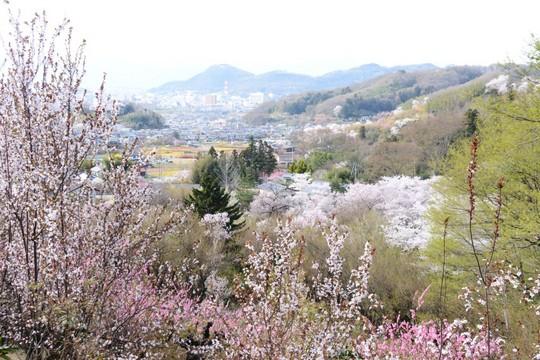 201804051541 桜源郷 w1024 DSC_0873.jpg