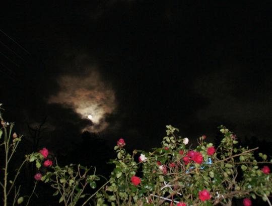 201611141841 super moon and rose w800 DSC03797.jpg