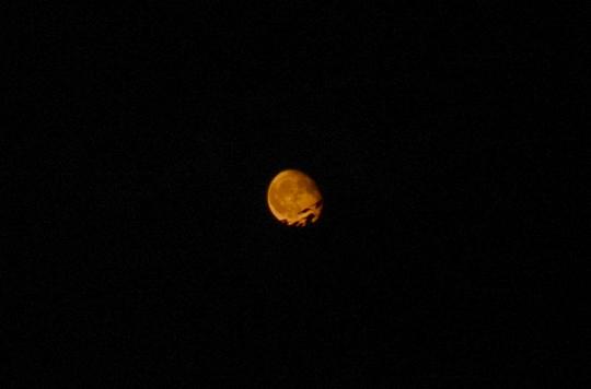 20170909201954 花火の後に月 w800 DSC_8037.jpg