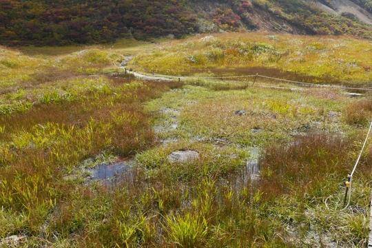 20170926104356 昭和湖手前の湿地 w1024 P1130232.jpg