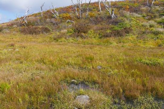 20170926104410 昭和湖手前左も湿地 w1024 P1130233.jpg