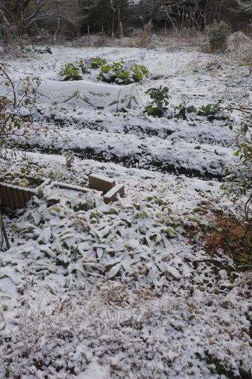 20171212080414 雪の家庭菜園 h800 P1160534.jpg