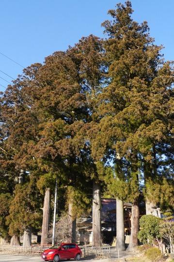 20180102142958 大きな杉 h800 P1170718.jpg