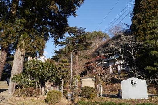 20180102143020 桜の木 w800 P1170719.jpg