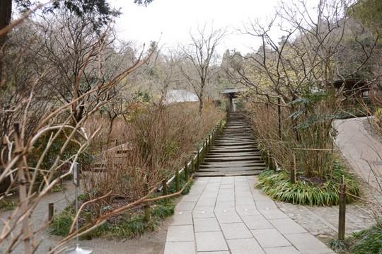 201802161331 鎌倉石の参道 w800 DSC_0022.jpg
