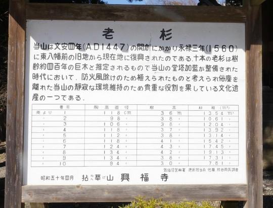 201901021112 老杉解説 w1024 P1370520.jpg