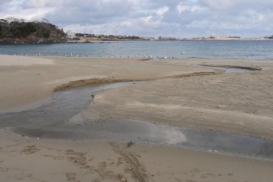 201901131430 砂浜 w1024 P1380104.jpg