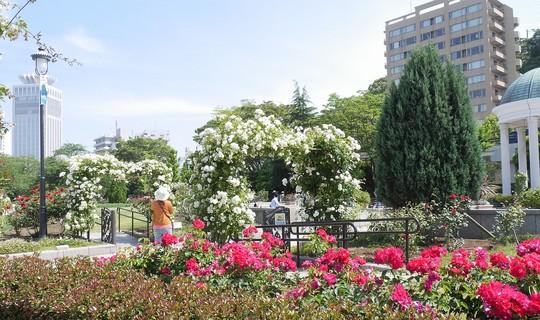 201905261355 公園 w1280 P1480519.jpg