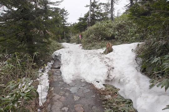201906101128 残雪 w1024 P1500673.jpg